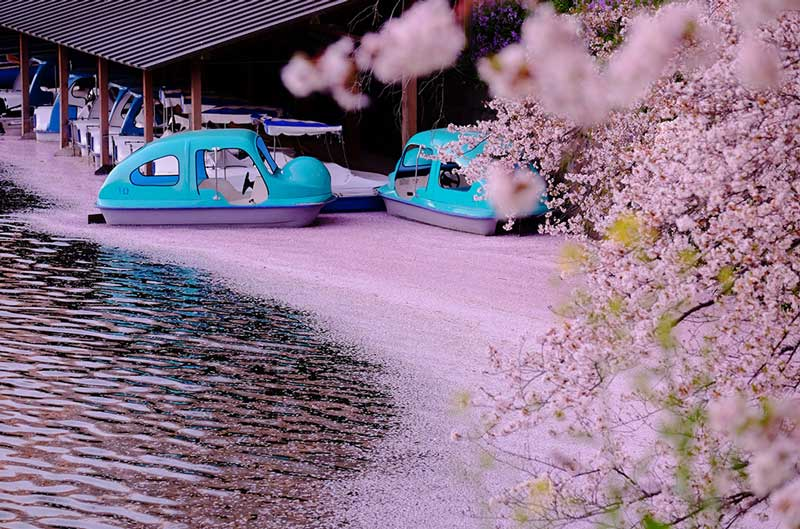 区営千鳥ヶ淵ボート場